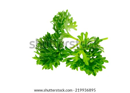 Fresh parsley herb isolated on white  - stock photo