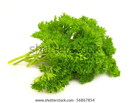 Fresh parsley herb isolated on white - stock photo