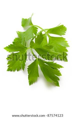 Fresh parsley isolated on white - stock photo