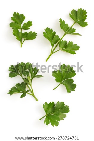 fresh parsley isolated on white background - stock photo