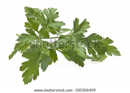 Fresh parsley isolated over a white background.