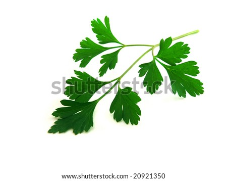 fresh parsley leaves isolated over white background
