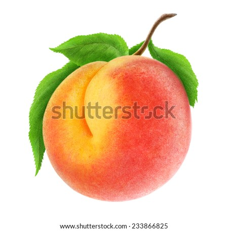 Fresh peach on a branch isolated on white, with clipping path - stock photo