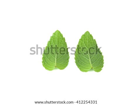 Fresh Peppermint Leaf Isolated On White Background.