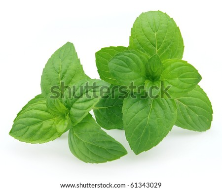 Fresh peppermint on a white background - stock photo