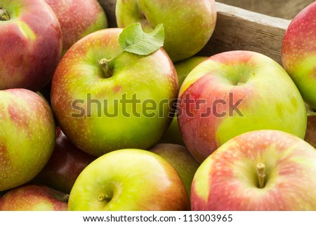 Fresh picked apples - stock photo