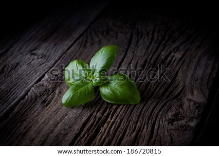 Fresh picked basil leaves. Green herbs taken on rustic old table.