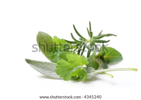 Fresh-picked herbs, straight from my herb garden.  Parsley, sage, rosemary and oregano. - stock photo