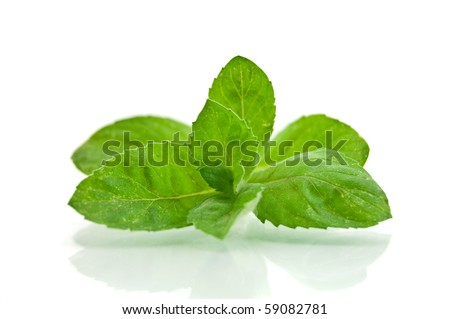 Fresh-picked mint leaves - stock photo