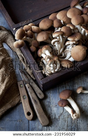 fresh picked mushrooms on vintage wooden box on rustic table with knives - stock photo