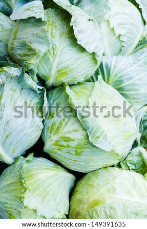 Fresh pile of cabbage at the local farmer's  market.