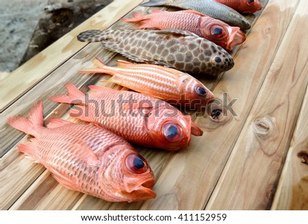 fresh Pinecone soldierfish for cooking from asian fishery market photo in daylight time show big eyes and pink scales - stock photo