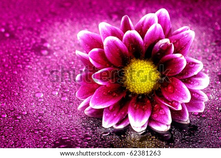 Fresh pink and purple flower with water drops - stock photo