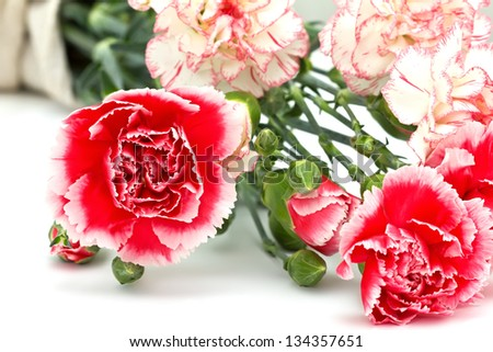 Fresh pink carnations on white background - stock photo