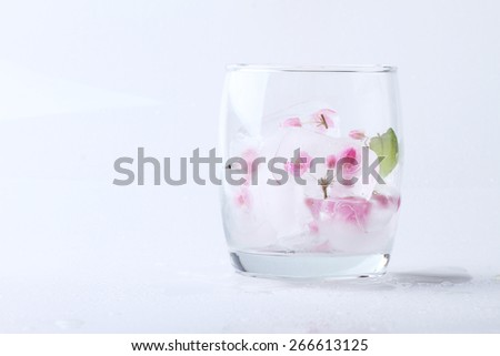 Fresh pink flower frozen in ice cubes isolated on white background. Fresh for summer drinks - stock photo
