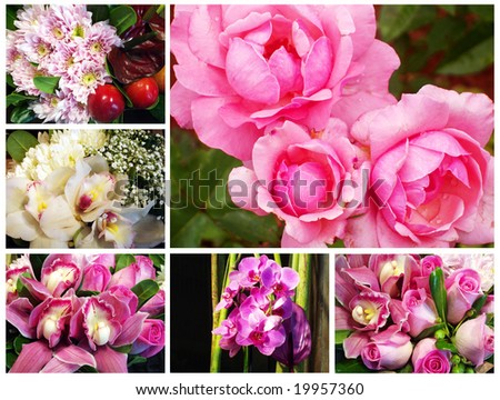 fresh pink flowers - stock photo