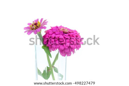 Fresh pink flowers in glass water Isolated on white background