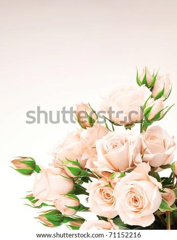 Fresh pink roses border, beautiful isolated flowers - stock photo