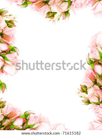 Fresh pink roses frame border isolated on white background - stock photo