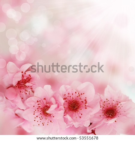 Fresh, pink, soft spring cherry tree blossoms on pink bokeh background. Very shallow DOF. - stock photo