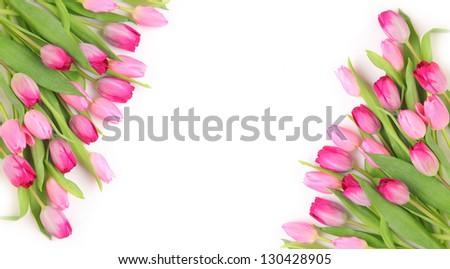 fresh pink tulips on white background - stock photo