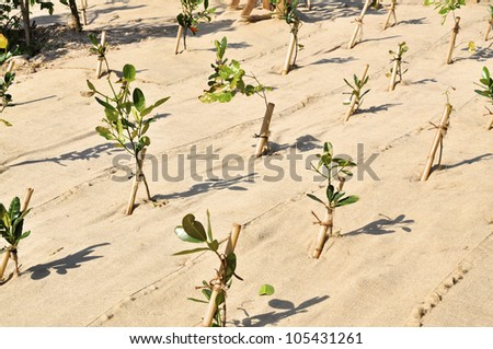 Fresh planted trees on a reforestation project. The earth is covered by cloth to prevent erosion. - stock photo