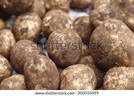 fresh potato - stock photo