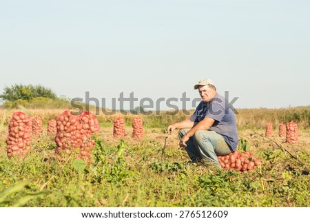 Fresh potatoes in sack - stock photo