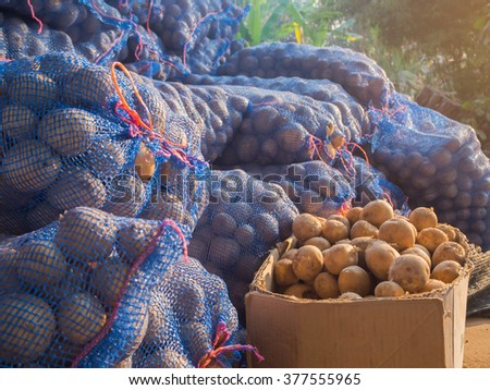 fresh potatoes in the box, potatoes, view on bags and crates of potato in storage house - stock photo