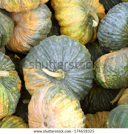 Fresh pumpkins waiting to be processed