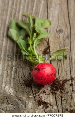 Fresh radish in soil on old wooden background - stock photo