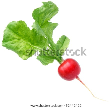 fresh  radish  isolated on the white background - stock photo