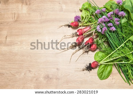 Fresh radish with green garden herbs. Vegetable. Healthy food ingredients - stock photo
