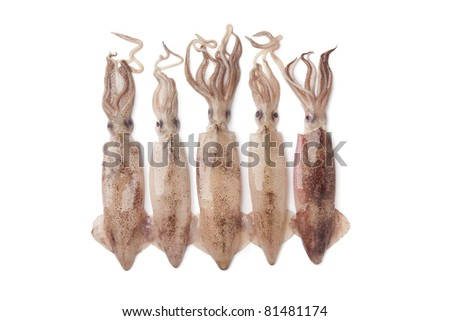 Fresh raw calamari on white background