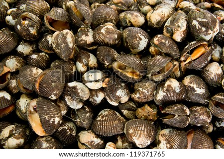 Fresh raw clams a market at Malaysia, Asia - stock photo