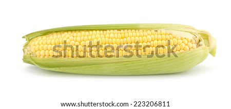 Fresh raw corn cobs isolated on the white background - stock photo