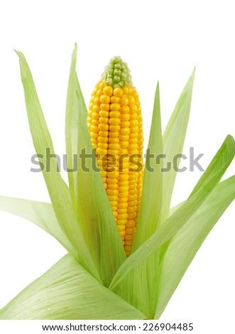fresh raw corn on white background. isolated - stock photo