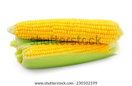 Fresh raw corn on white background. isolated - stock photo