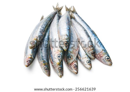 Fresh raw European pilchard isolated  on white background - stock photo