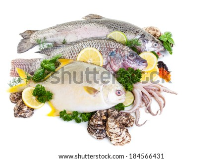 Fresh raw fish display with oysters and squid on a white background. - stock photo