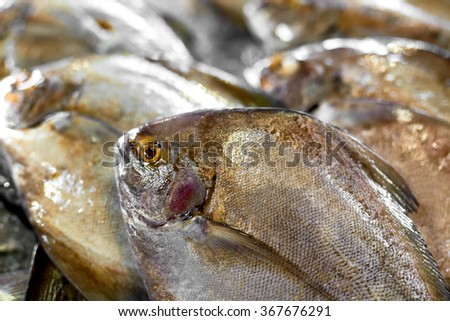 Fresh Raw Food. Close Up Of Variety Of Fresh Caught Fish On Crashed Ice At Fish Market In Thailand, Asia. Seafood. Healthy Eating. Nutrition, Diet And Vitamins. Food Background.