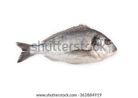 Fresh raw Gilt-head sea bream isolated on a white background. - stock photo