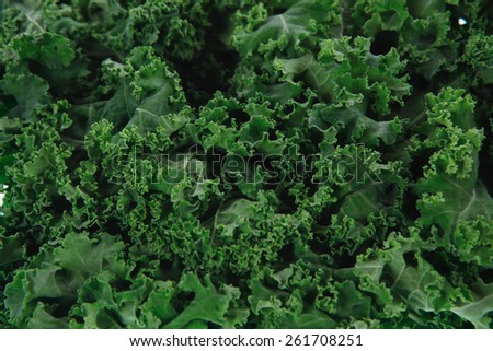 fresh raw green kale packed in plastic box ready to sell isolated over white background - stock photo