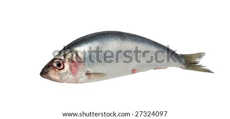 Fresh raw herring isolated on white - stock photo