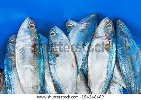 Fresh raw mackerel fish - stock photo