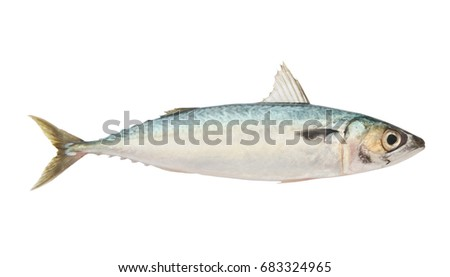 Fresh raw mackerel fish isolated on white