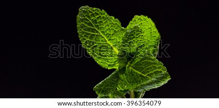 Fresh raw mint leaves isolated  - stock photo