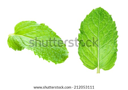 Fresh raw mint leaves isolated on white background - stock photo