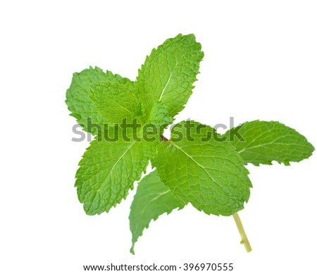 Fresh raw mint leaves isolated on white background. - stock photo