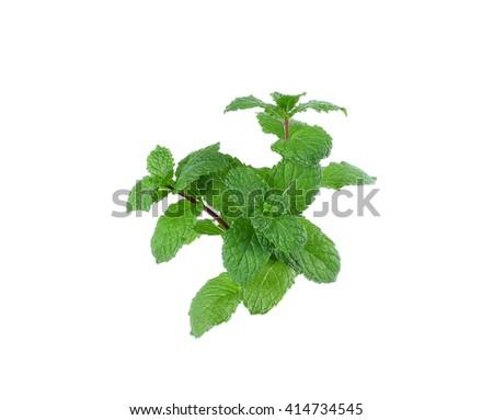 Fresh raw mint leaves isolated on white background - stock photo